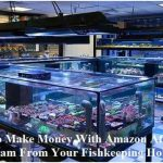 How To Make Money With Amazon Affiliate Program From Your Fishkeeping Hobby